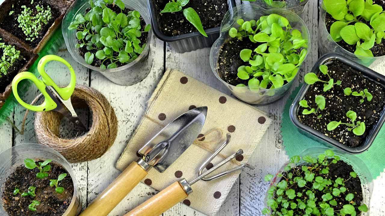 Herbs in the house prefer - small pots with fresh herbs