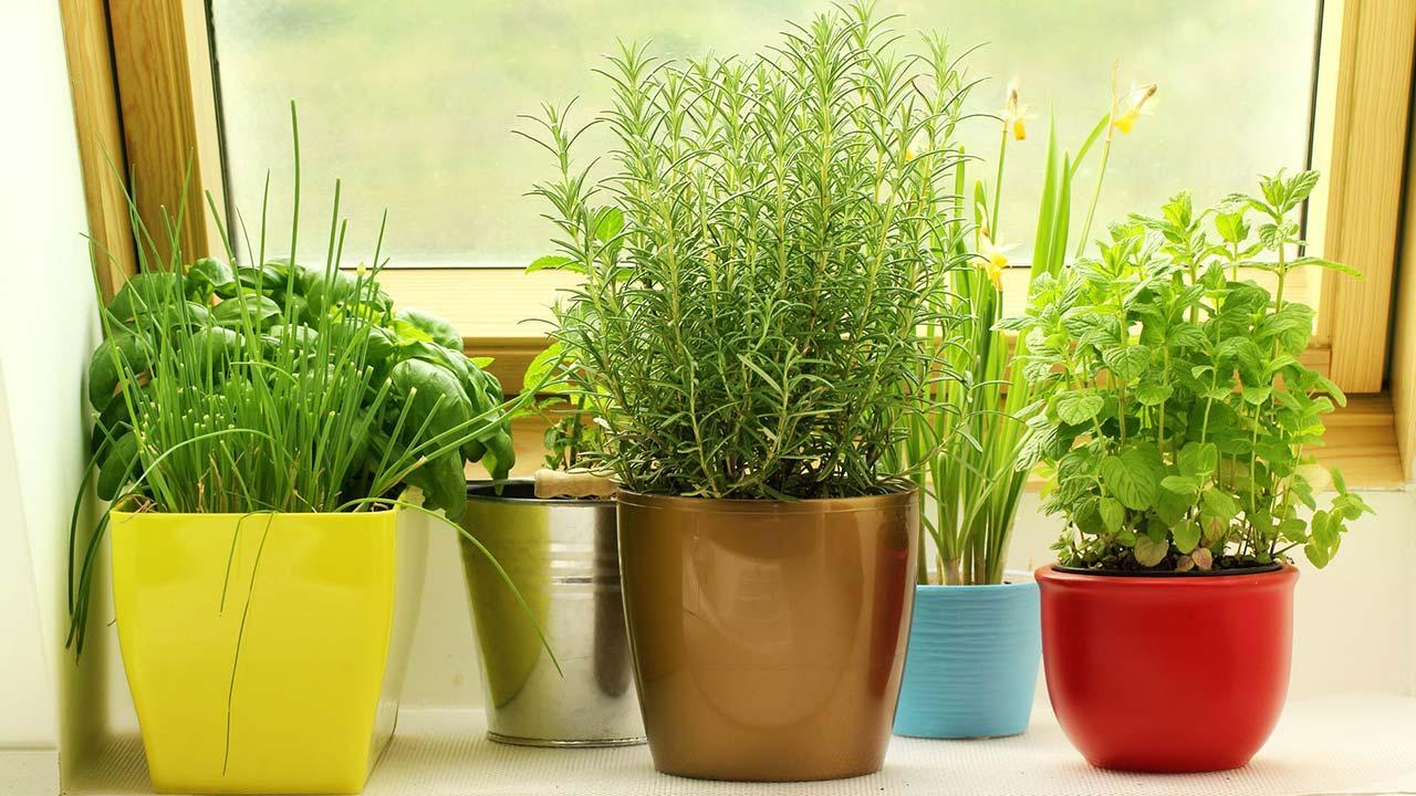 Herbs in the house prefer - fresh herbs by the window