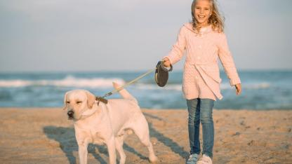 Advantages of the running leash for dogs