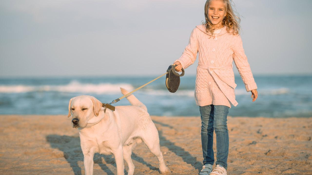 Advantages of a running leash for dogs - a dog with a running leash on the beach