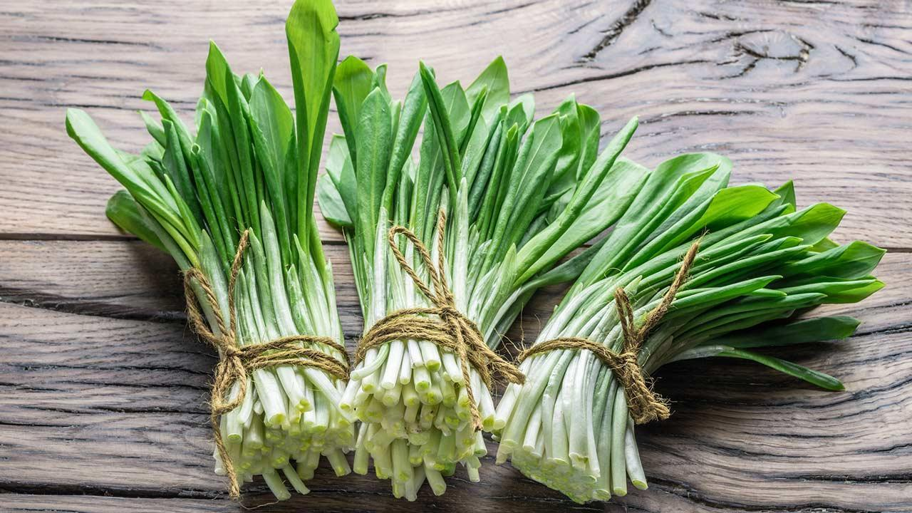 The best wild garlic recipes - young fresh wild garlic on the wooden table