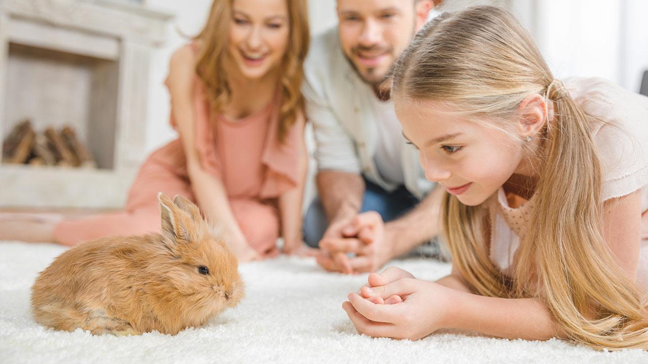 A rabbit as a pet / a girl with a rabbit