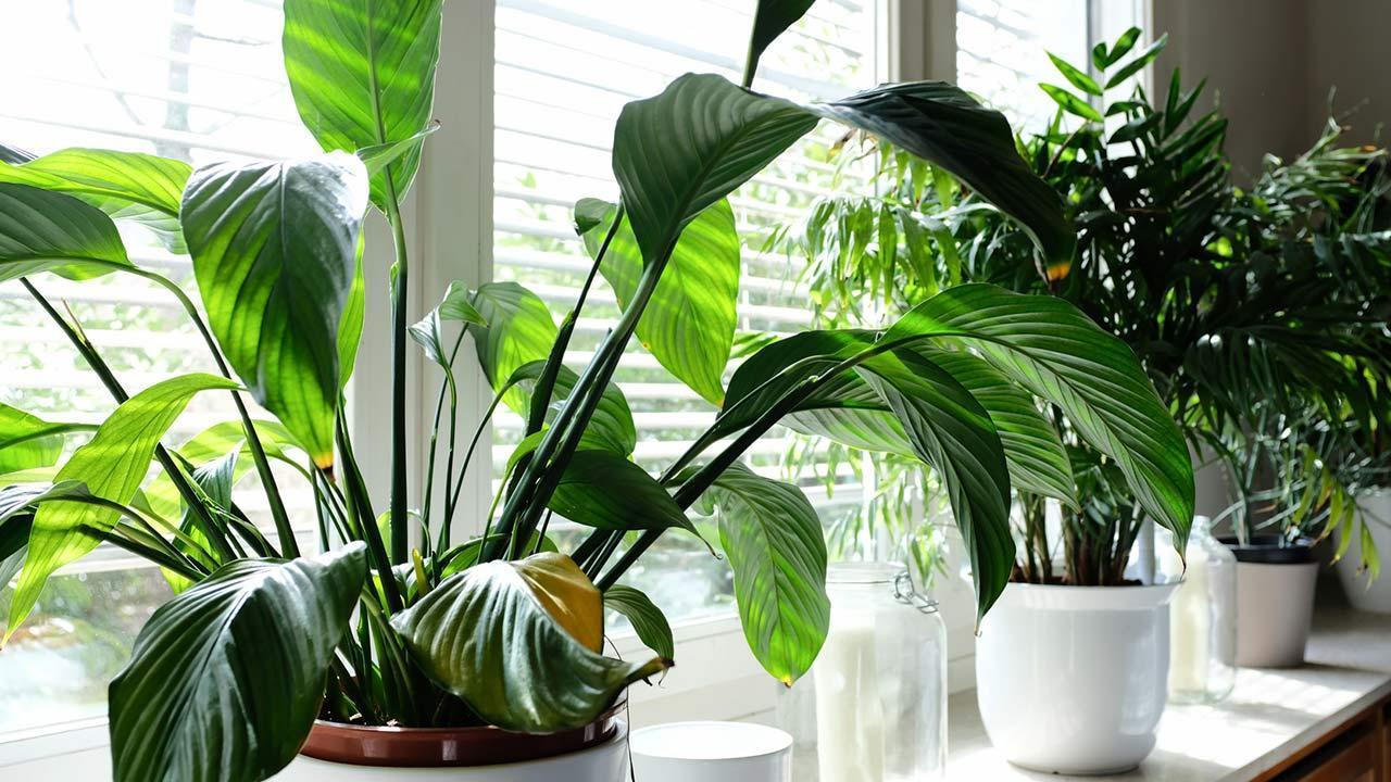 Nice summer decoration on the windowsill / many different plants on the windowsill