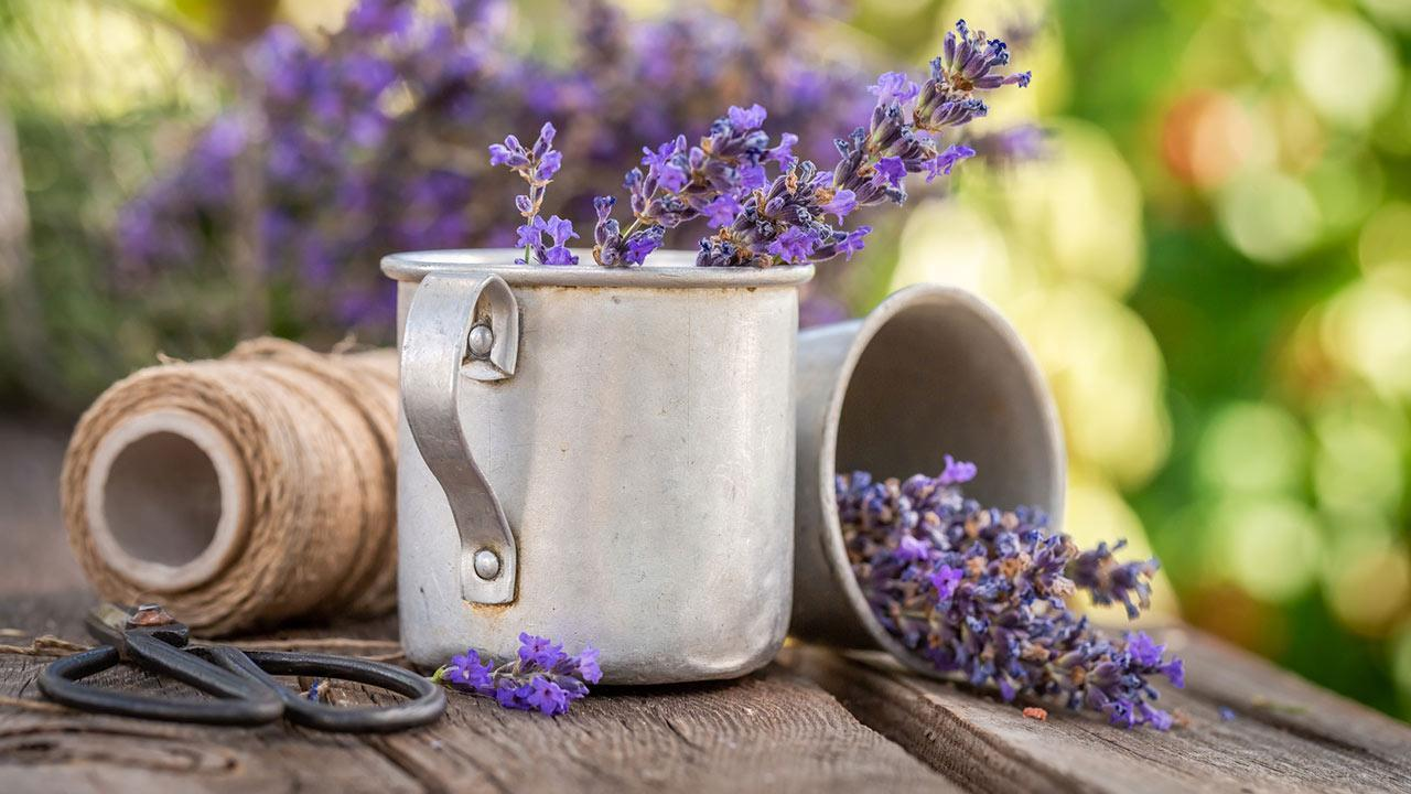 Ants in the house ! What to do? / Lavender in the pot