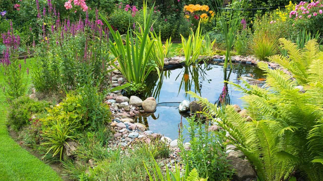 Create waters in your own garden / pond with lots of green