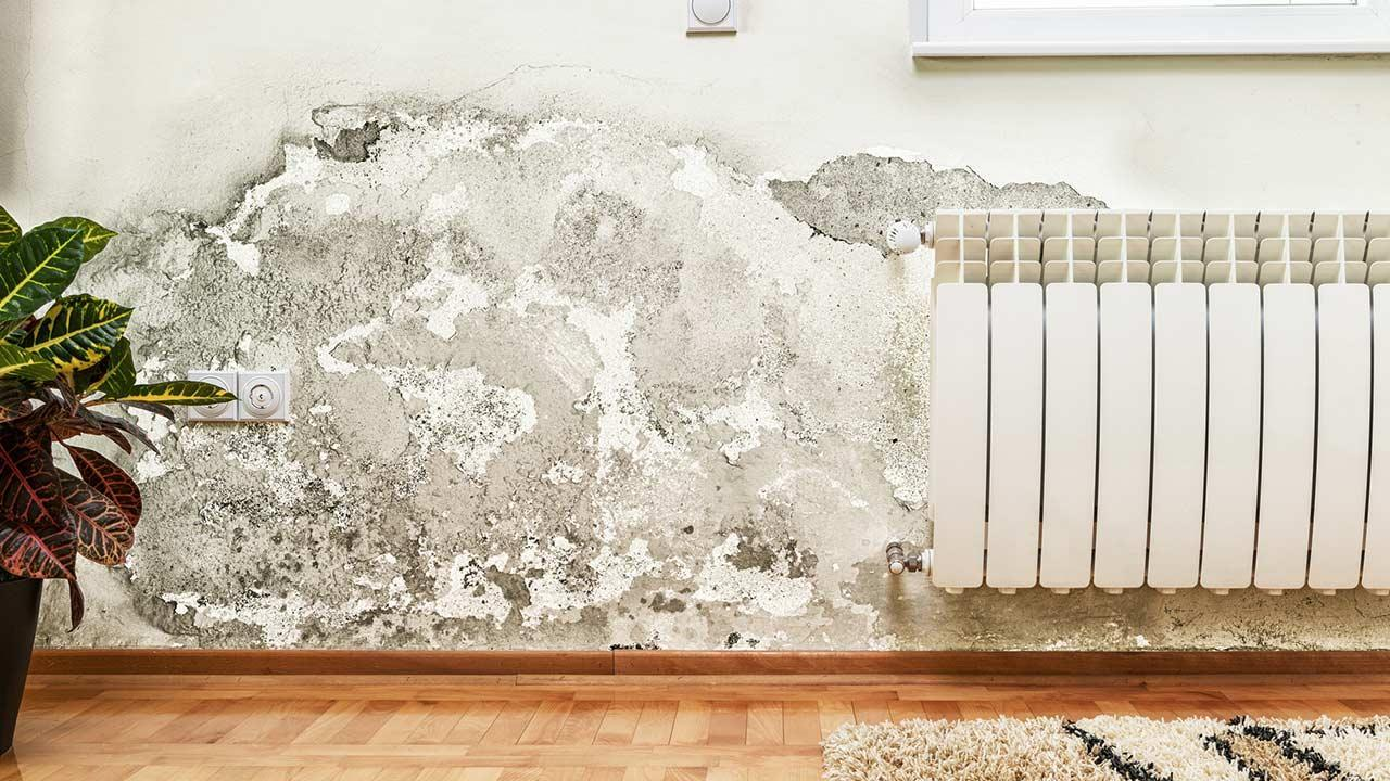 Mould on the wall - What to do - Mould on the wall