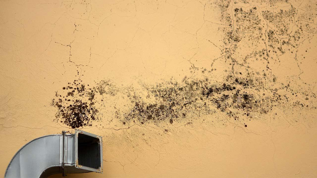 Mould on the wall - What to do - Mould on a ventilation