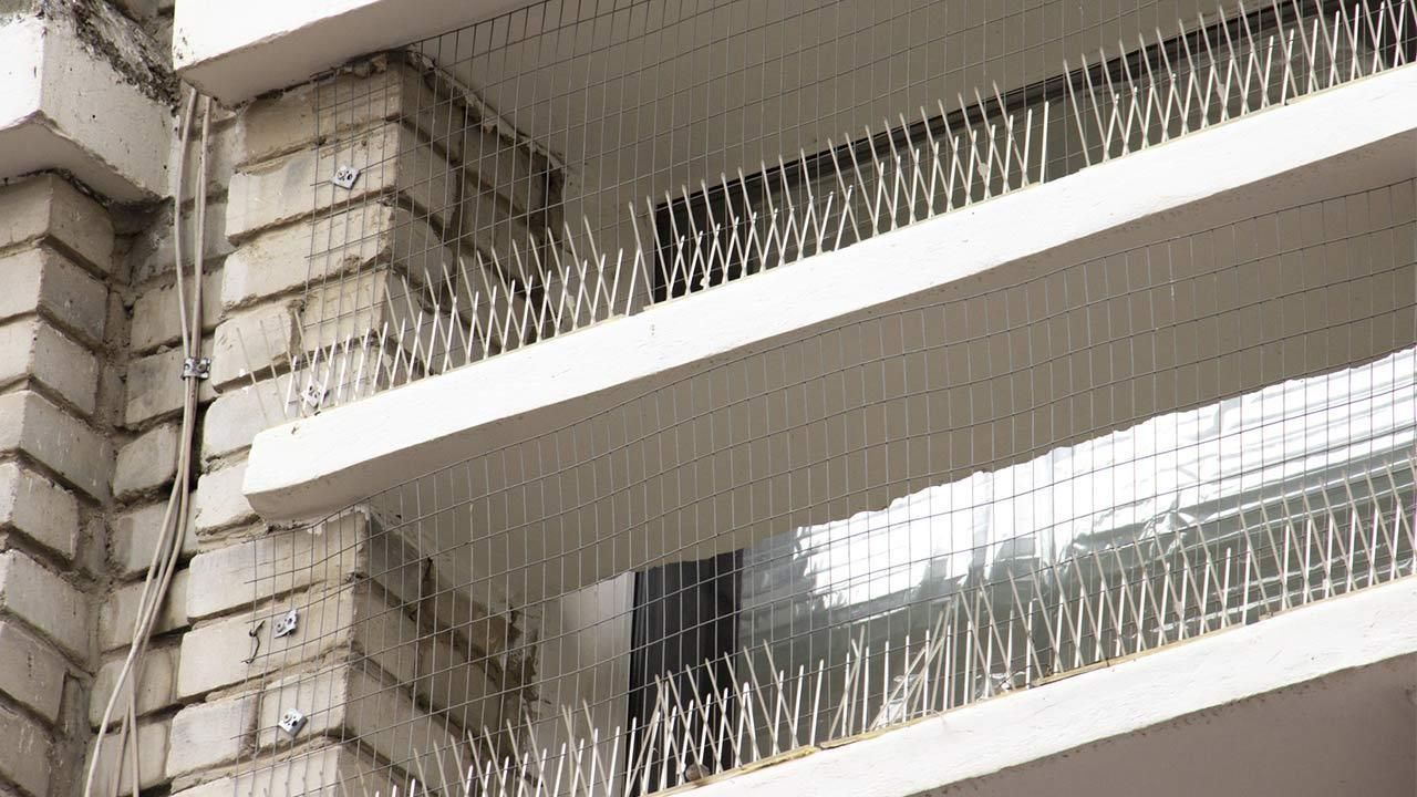 Pest control - pigeons / protected balcony with plastic spikes