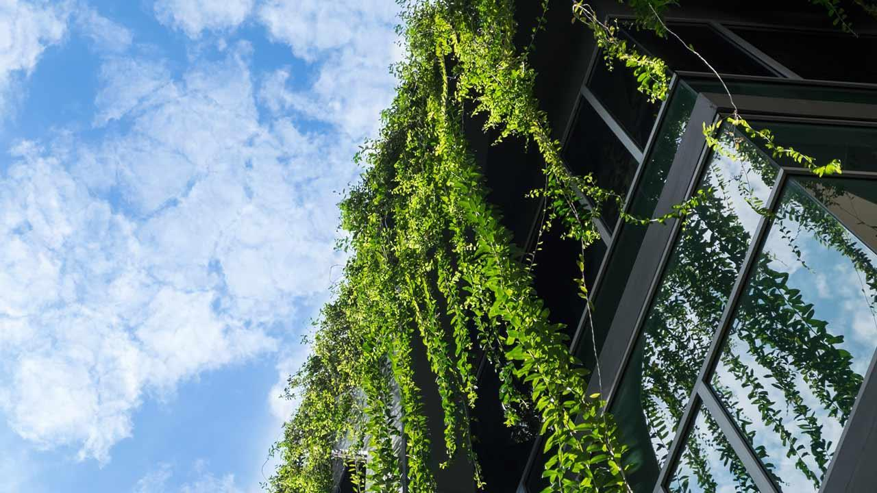 Natural privacy protection through ivy - in front of the windows