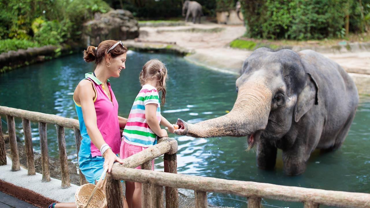 The most beautiful animal parks in Germany - Elephant fed by child