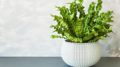 Indoor plants are good for the indoor climate