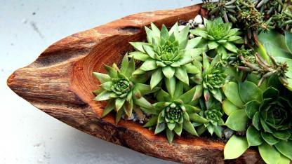 Easy-care indoor plants