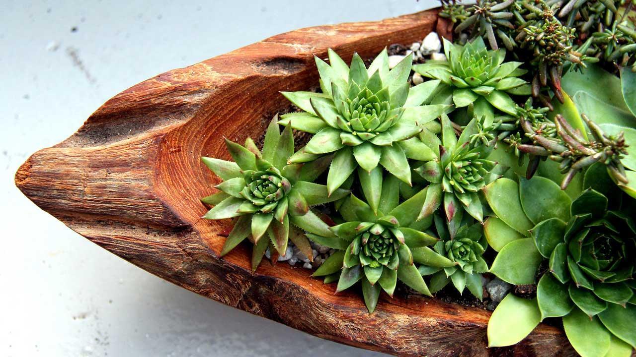 Easy-care indoor plants - Succulent arrangement