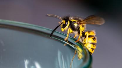 A wasps' nest at the house - what to do?
