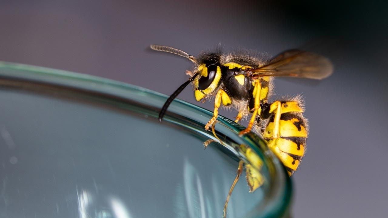 A wasps' nest at the house - what to do - Wasp