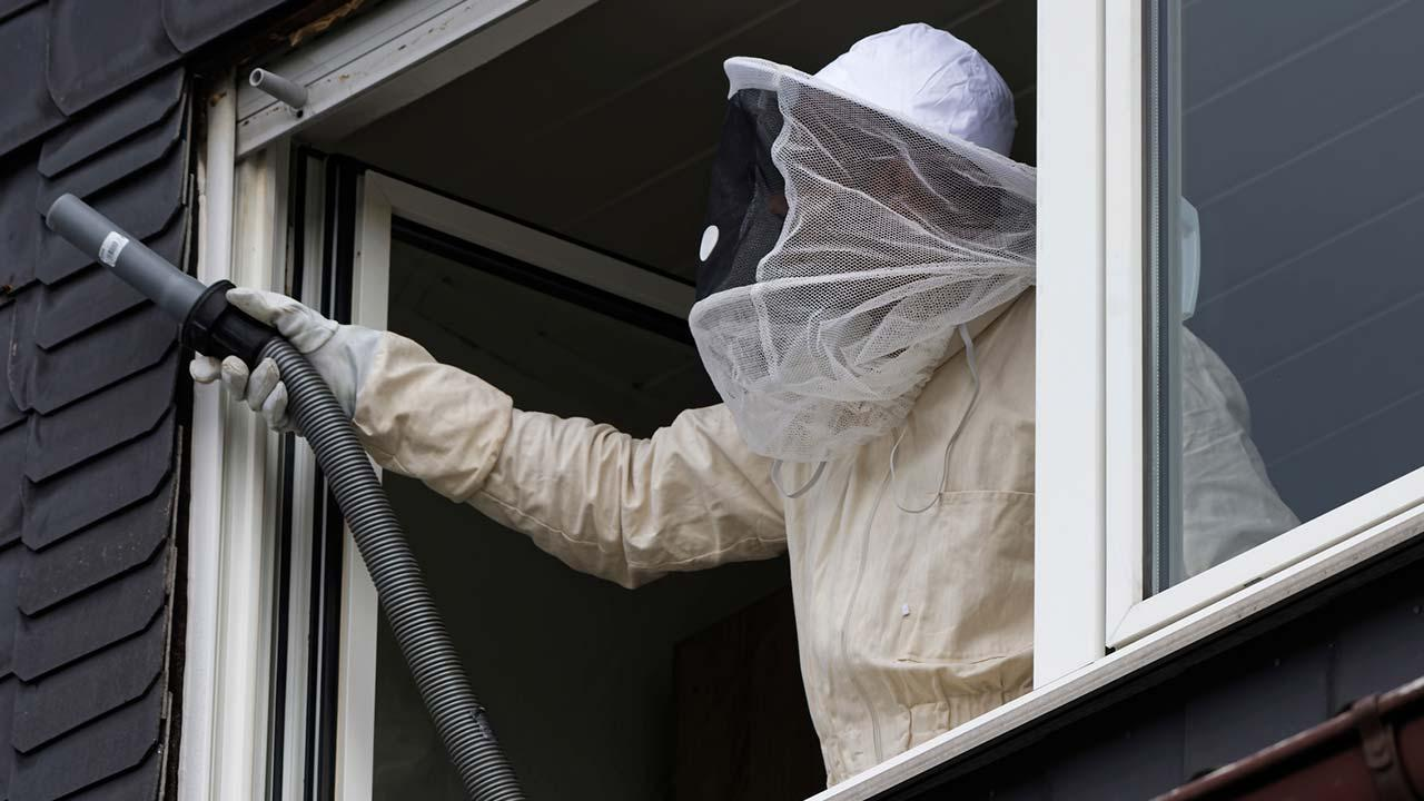 A wasps' nest at the house - what to do - exterminator