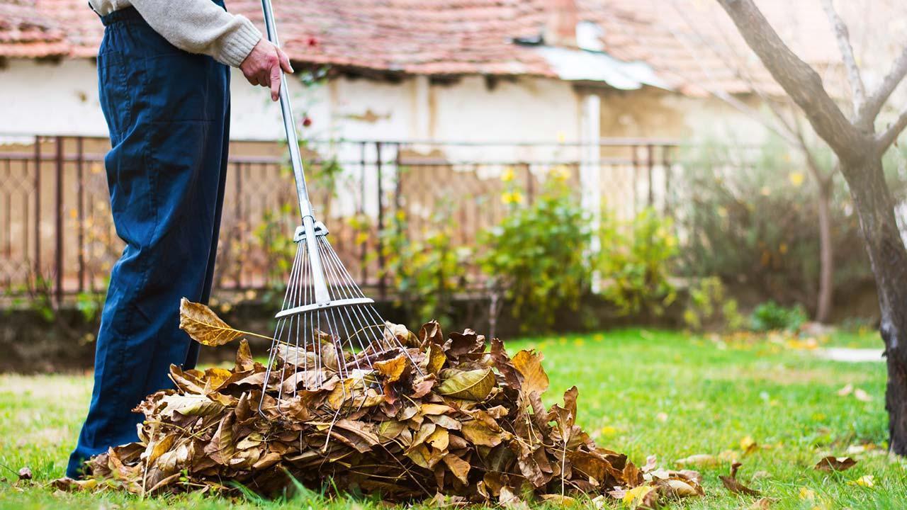 Garden work in autumn - raking leaves