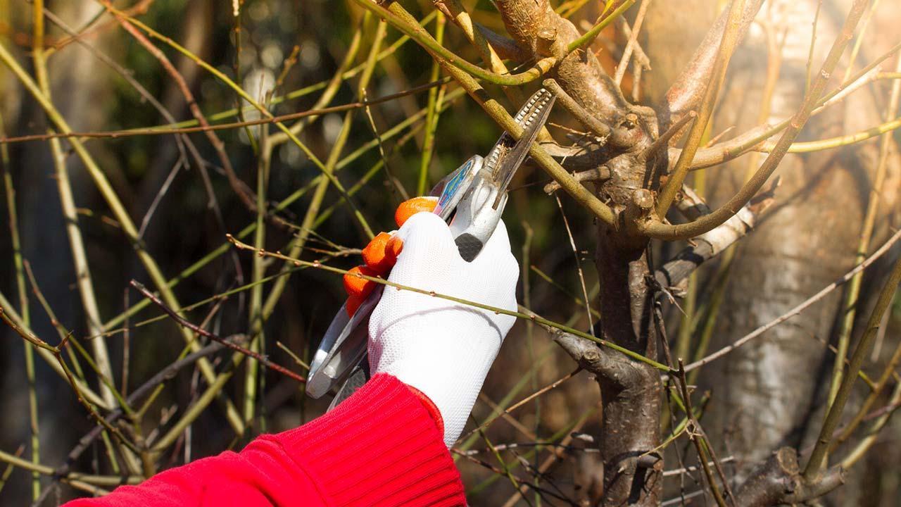 Garden work in autumn - cutting bushes